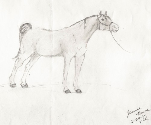 Arabian drawn at age 12.