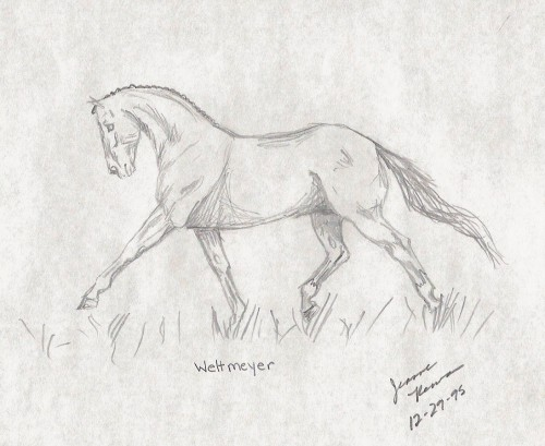 Dressage horse in extended trot drawn at age 12.
