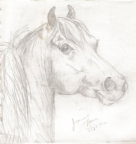 Morgan horse head study drawn at age 14.