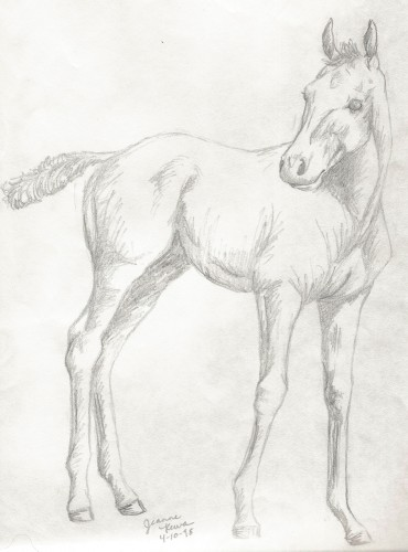 Drawing of a foal at age 15.