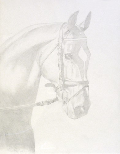 Head study of dressage horse drawn at age 16.