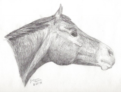 Drawing of my Thoroughbred gelding, Reno, drawn at age 16.