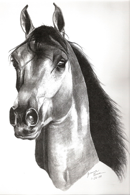 Head study of Arabian, drawn at age 17.