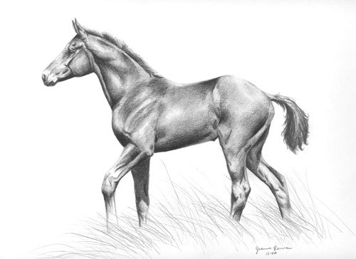 Drawing of foal, drawn at age 18.