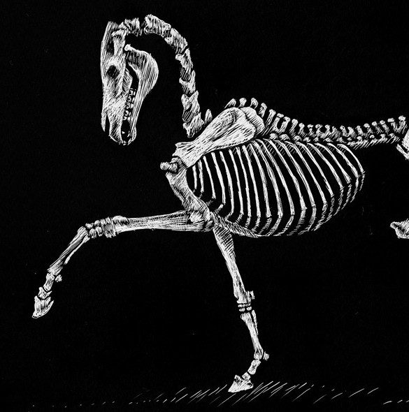 Trotting Skeleton Scratchboard