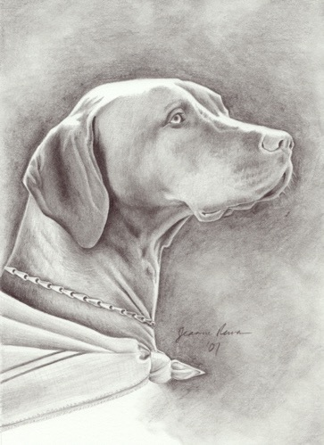 Graphite portrait of beautiful dog.